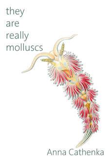 They Are Really Molluscs - Anna Cathenka